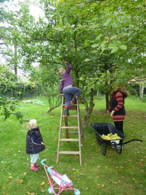 How to make Perry - harvesting apples and pears for cider from our orchard  @ www.jamesandtracy.co.uk